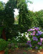 das-grne-Gartenfenster